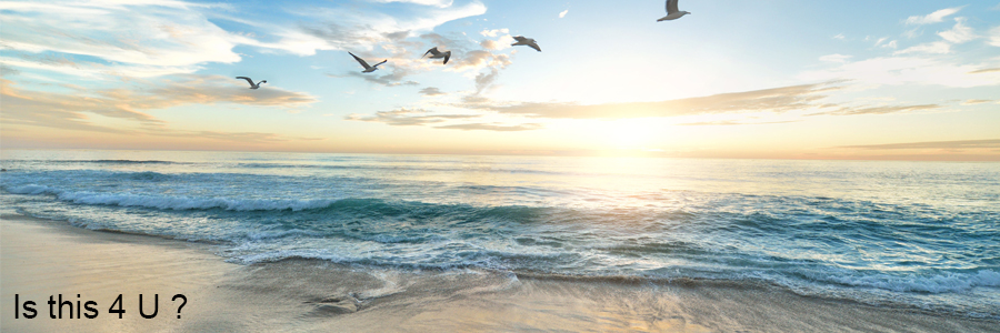 Financial Freedom Website - birds at sunset over ocean on beach
